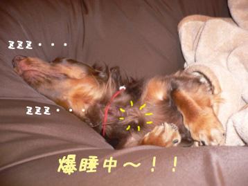 2007.11.24横浜大桟橋のコピー