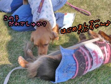 2007.11.24横浜大桟橋 (5)のコピー