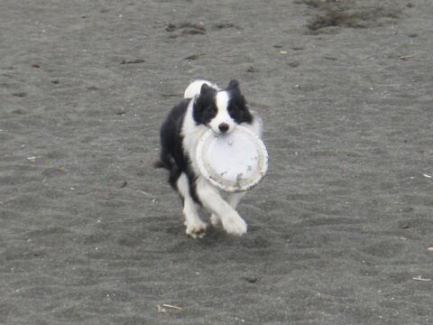 砂浜でかけっこ