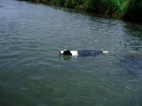 川で泳ごう