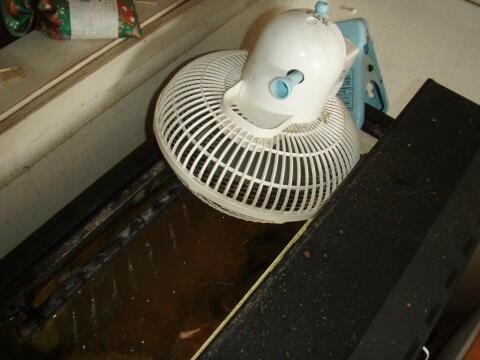 水槽に扇風機