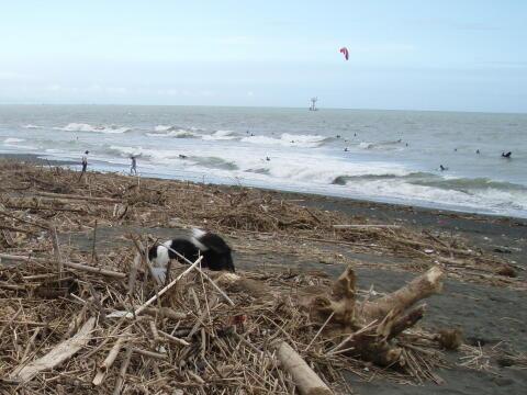 いつもの海岸はゴミだらけ