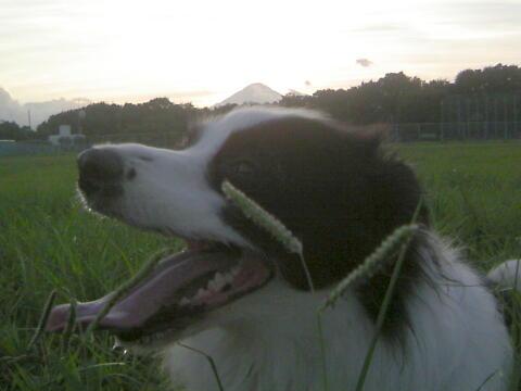 夕日に輝く富士山