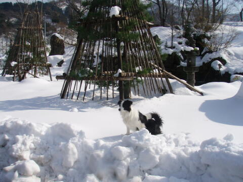 雪で遊ぼう
