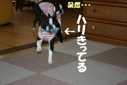 20070718163801.jpg