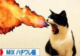 猫ブログ MIXハチワレ猫へ