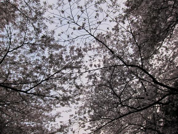 20110410i.jpg