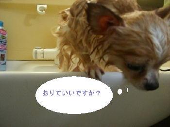 PHOTO032a.jpg