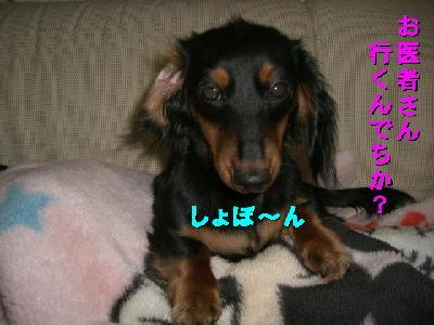 PHOTO117m2.13.jpg