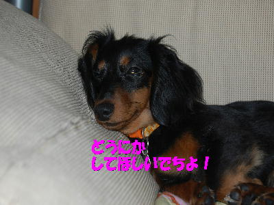 PHOTO120mo.jpg