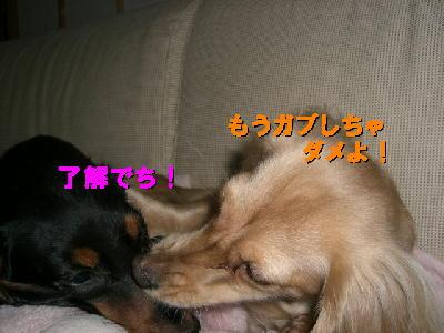 PHOTO122tm2.14.jpg