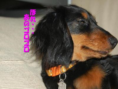PHOTO123mo.jpg