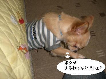 PHOTO131mi.jpg
