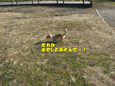 PHOTO148t.jpg