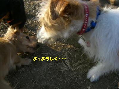 PHOTO149t.jpg