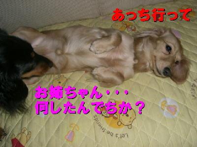 PHOTO158tm2.17.jpg