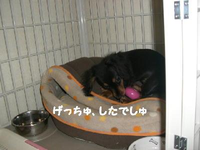 PHOTO188mo.jpg