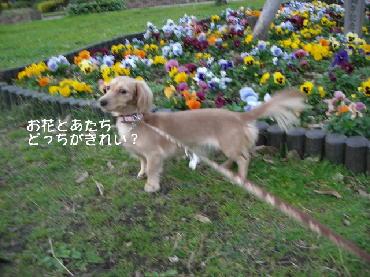 PHOTO207t.jpg