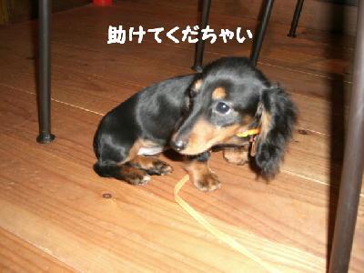 PHOTO224mo.jpg