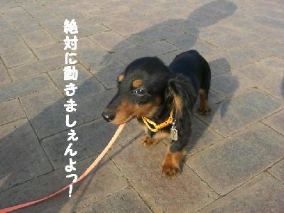PHOTO230mo.jpg
