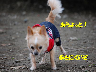 PHOTO246mi.jpg
