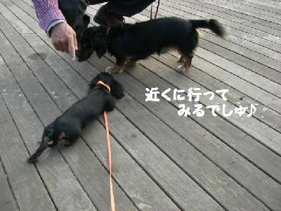PHOTO247mo.jpg