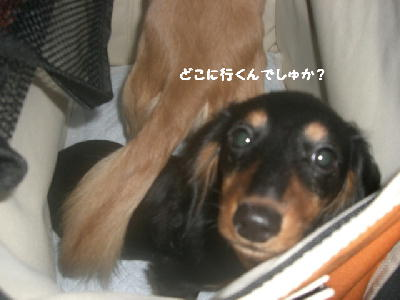 PHOTO251mo.jpg