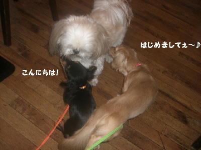 PHOTO255tmo.jpg