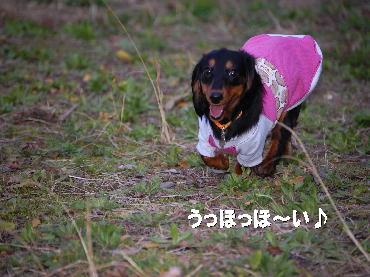 PHOTO256mo3.10.jpg