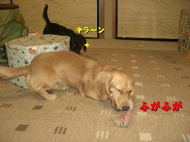 PHOTO259tm2.27.jpg