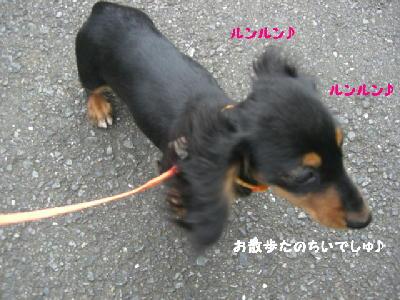 PHOTO261mo.jpg