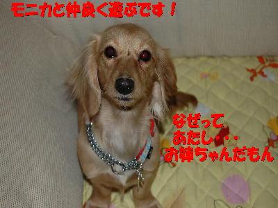 PHOTO280t.jpg