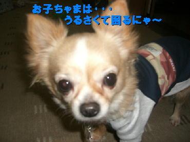 PHOTO354m3.14.jpg
