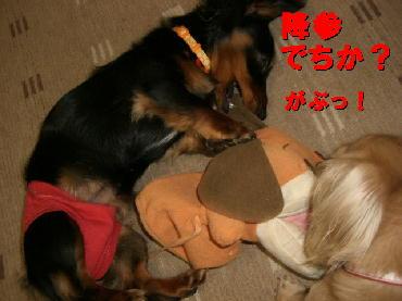 PHOTO379m3.20.jpg