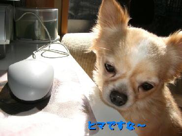PHOTO394m3.22.jpg