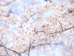 2012_Apr_7.jpg