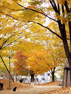 江坂公園の紅葉