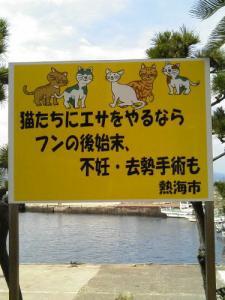 0807-hatusima4.jpg