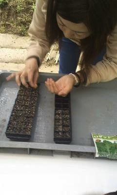 河童農園、種から_convert_20110523223412