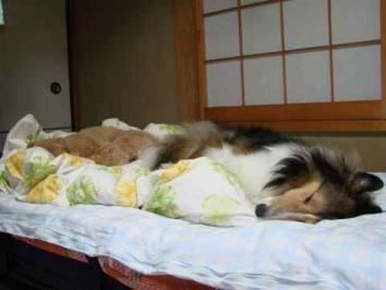 自分のベッドで寝てケロ