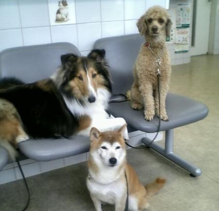 獣医さんの待合室