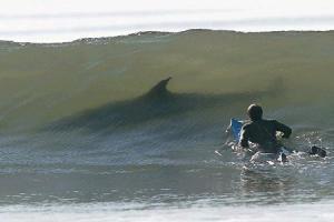 shark9999.jpg