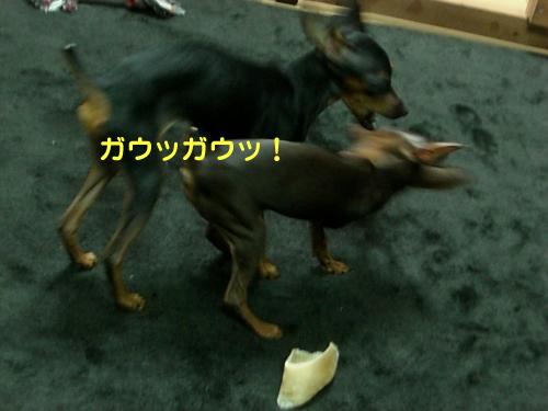 nakayoshi02.jpg