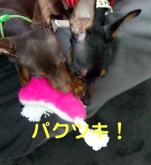 nakayoshi06.jpg
