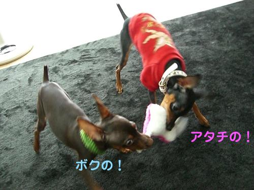 nakayoshi08.jpg