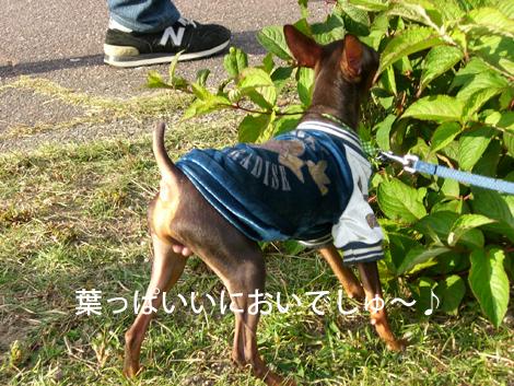 ryokuchi04.jpg