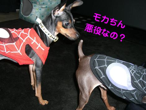 spider03.jpg