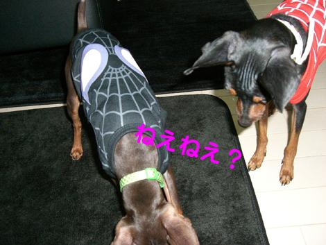 spider07.jpg
