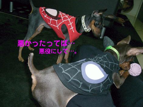 spider09.jpg