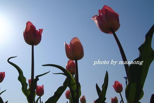 image.180.jpg